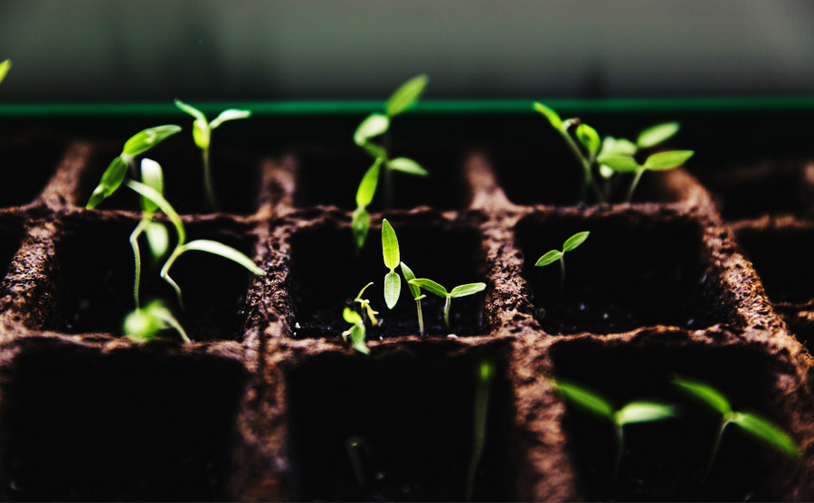 A story about entrepreneurship (2/4): Grow and scale