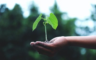 Secure yourself some seed capital and get started