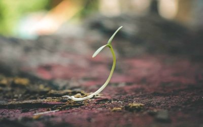 Is pre-seed funding all you'll ever need?